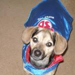 Darcy/Super Dog